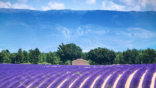Provence Wine Tour: a 2600 years wine region tradition!